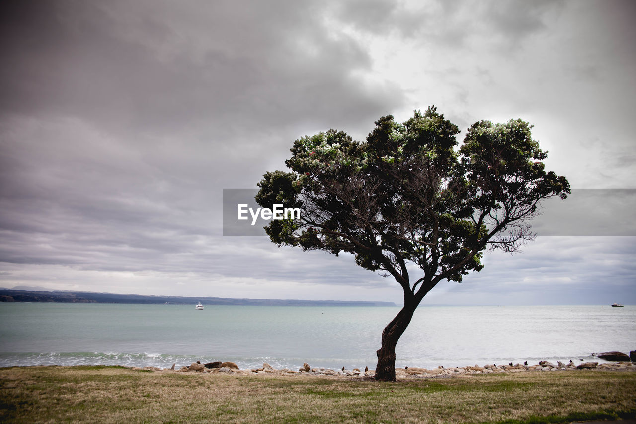sea, sky, horizon over water, cloud - sky, water, nature, scenics, tranquility, tree, beauty in nature, tranquil scene, beach, outdoors, day, landscape, no people, grass