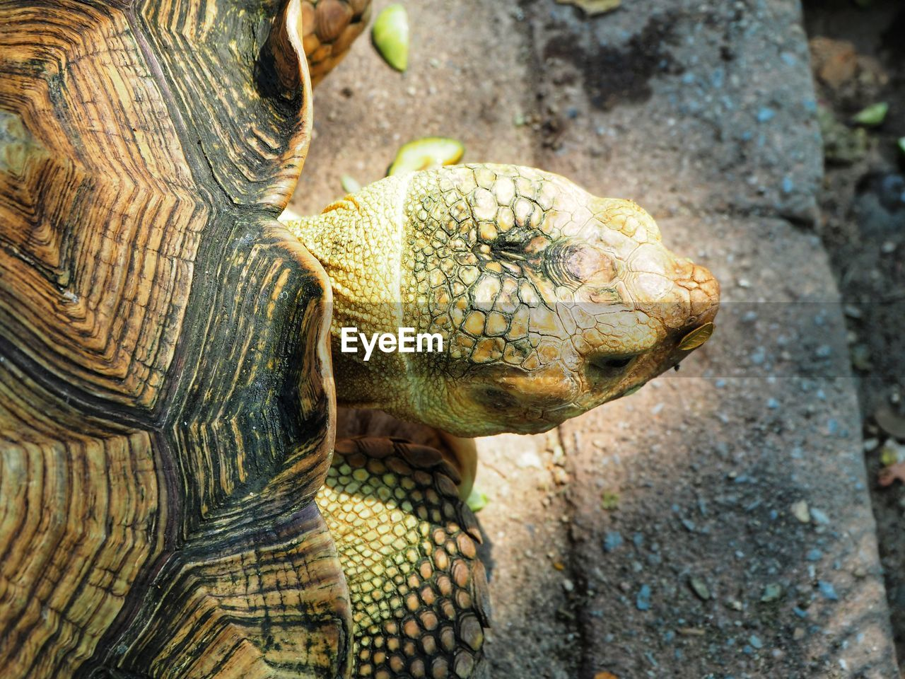 animal themes, animal, reptile, animal wildlife, one animal, animals in the wild, turtle, vertebrate, close-up, tortoise, animal body part, animal head, no people, nature, day, animal shell, shell, outdoors, focus on foreground, zoo, tortoise shell, animal scale