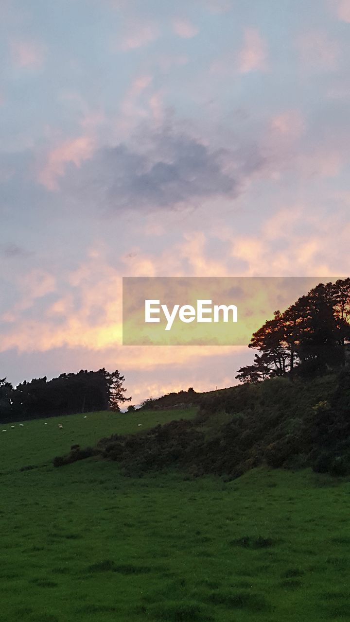 nature, tranquil scene, grass, tranquility, sky, sunset, landscape, beauty in nature, scenics, no people, tree, outdoors, cloud - sky, field, growth, mountain, day