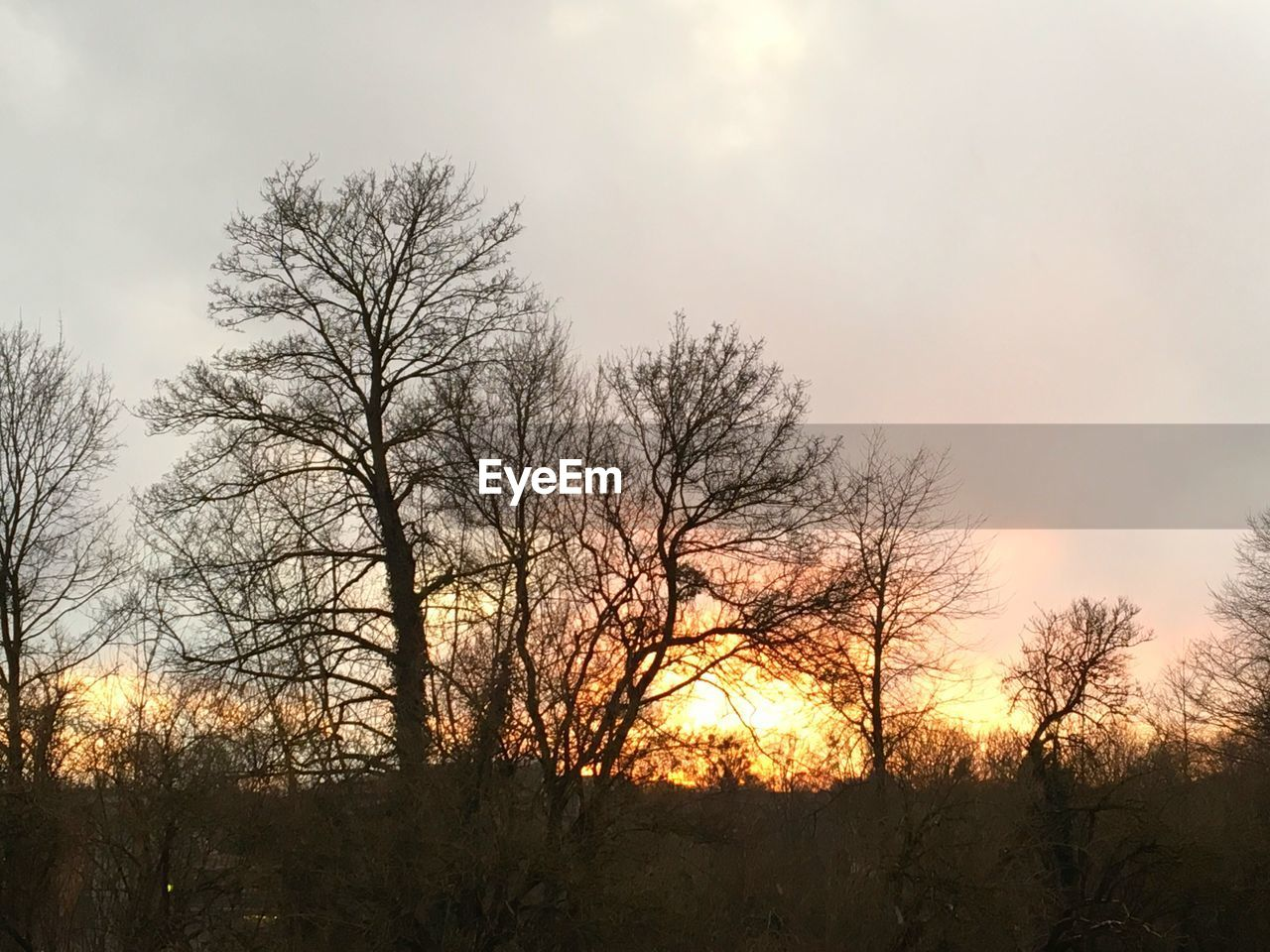 bare tree, tree, beauty in nature, sunset, nature, sky, scenics, sun, tranquil scene, tranquility, outdoors, no people, silhouette, low angle view, branch, landscape, day
