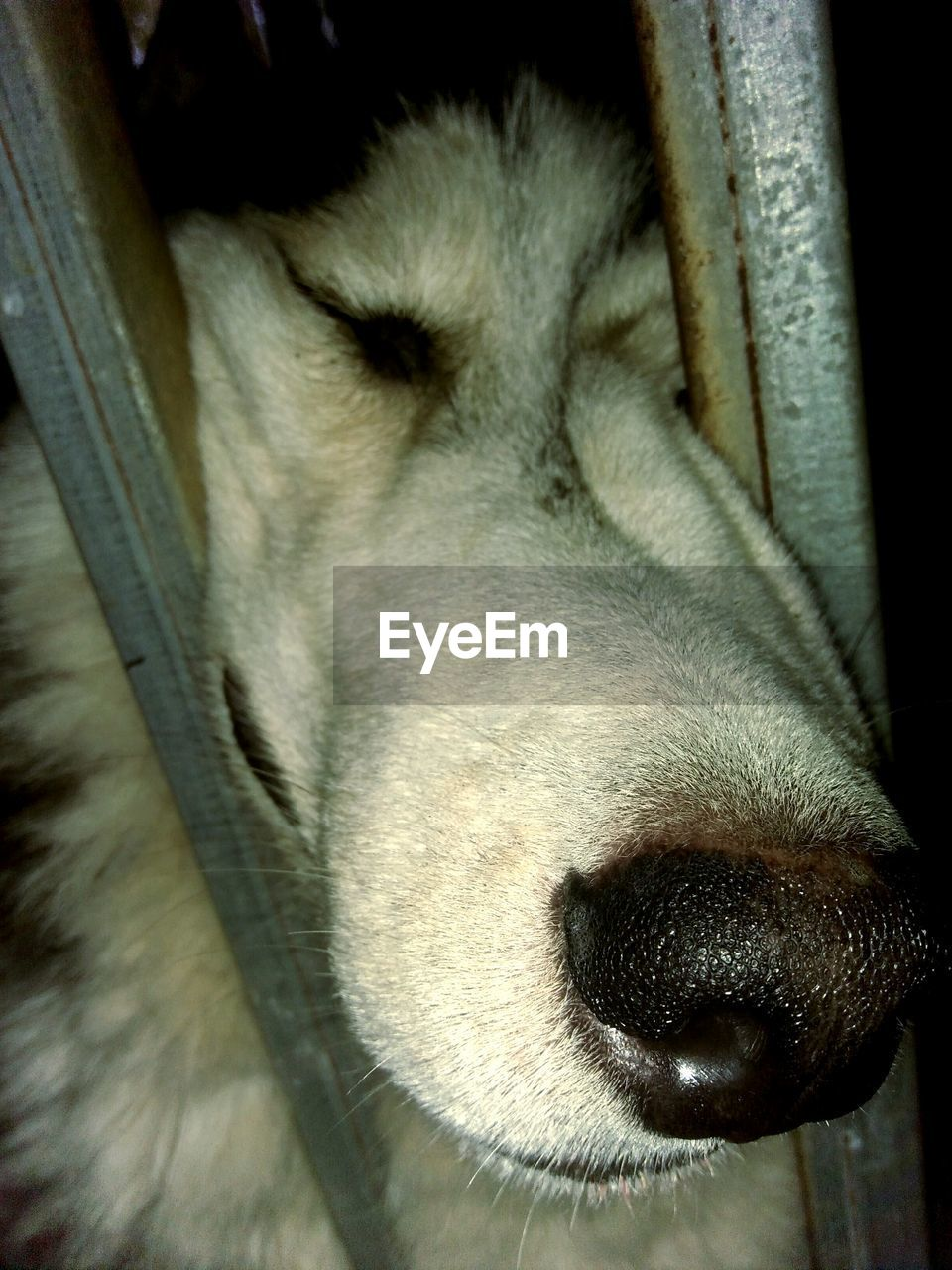 one animal, pets, domestic animals, dog, animal themes, mammal, close-up, animal head, no people, day, outdoors