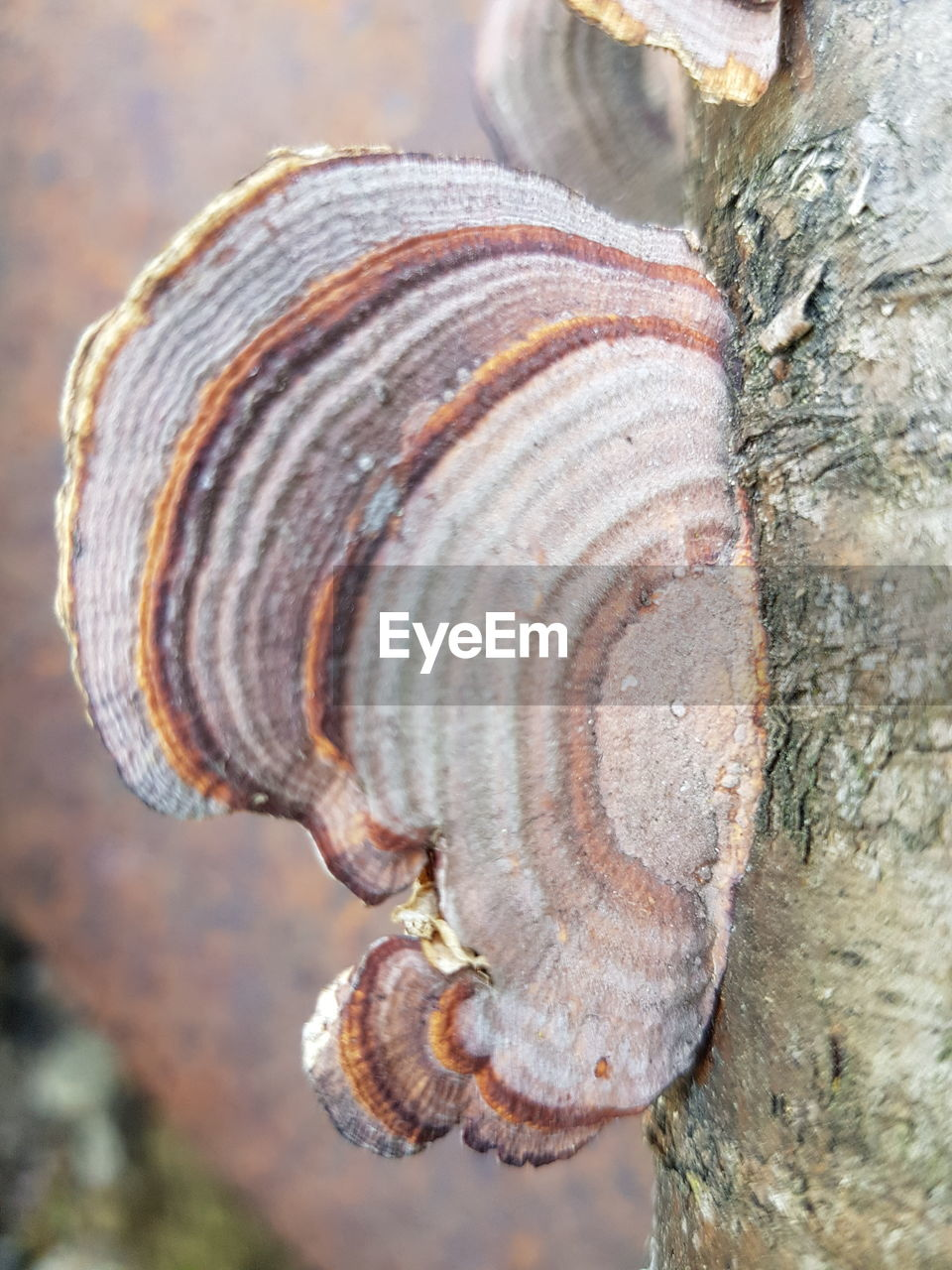 shell, close-up, animal wildlife, animal shell, tree trunk, focus on foreground, day, trunk, textured, animal, tree, natural pattern, animals in the wild, animal themes, nature, no people, pattern, outdoors, spiral, mollusk, bark