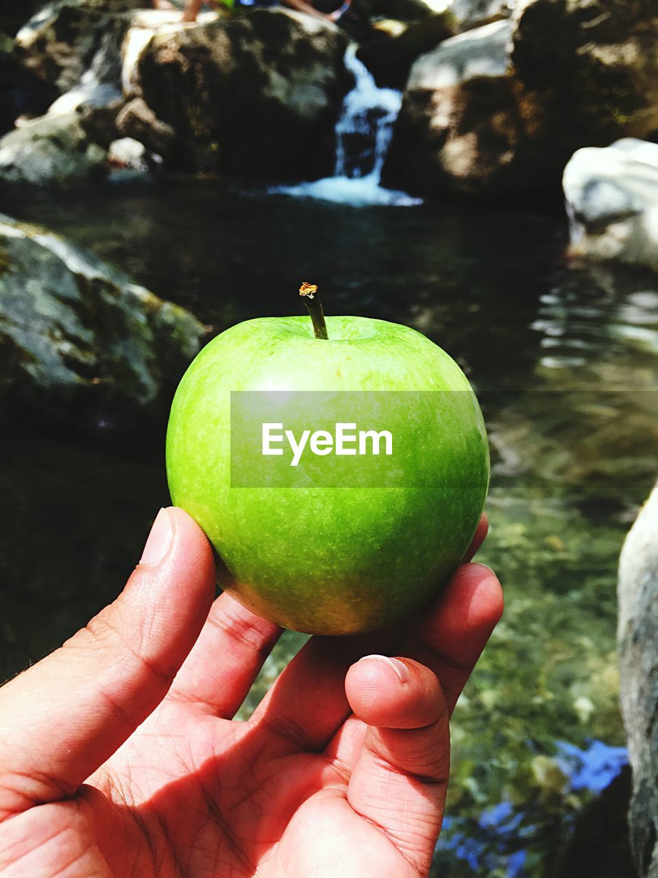 hand, human hand, healthy eating, food, human body part, fruit, food and drink, wellbeing, one person, green color, holding, real people, day, freshness, close-up, apple - fruit, focus on foreground, body part, unrecognizable person, apple, outdoors, finger