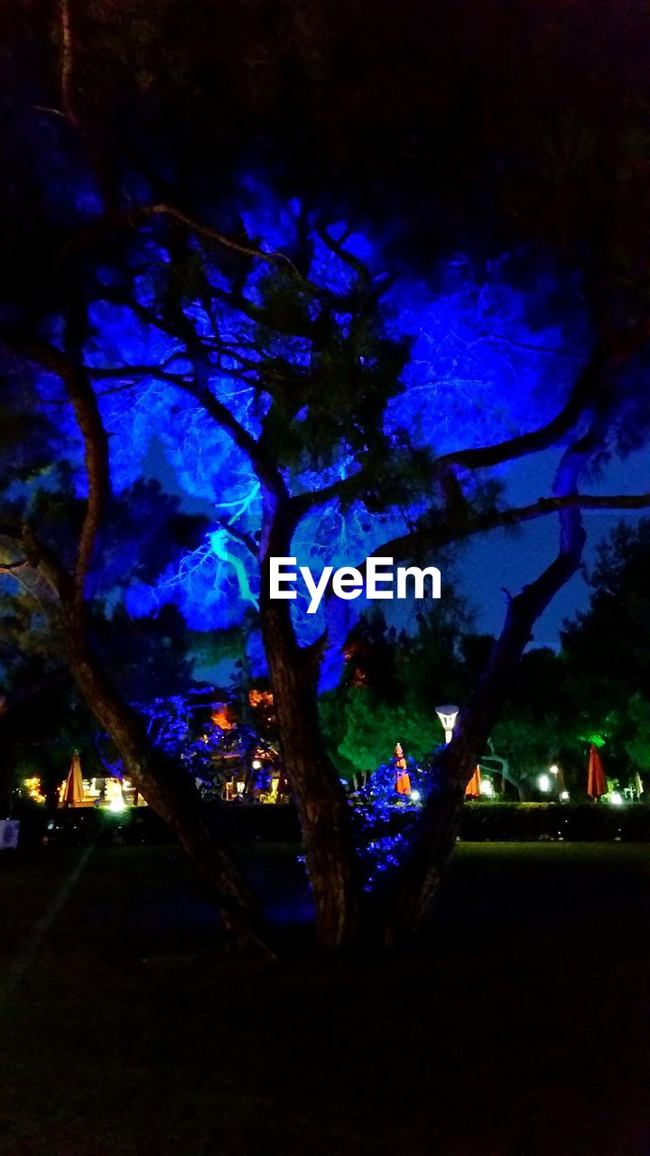 night, tree, illuminated, blue, branch, nature, beauty in nature, growth, outdoors, no people, sky