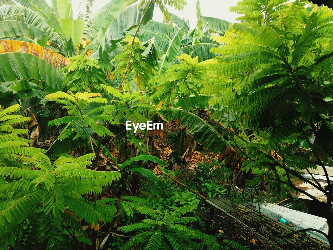 green color, growth, leaf, plant, nature, day, no people, outdoors, fern, close-up, beauty in nature, tree, freshness
