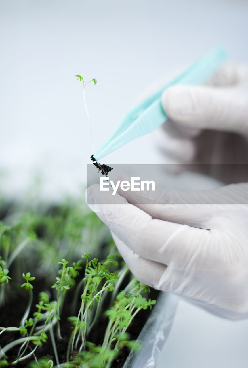 CLOSE-UP OF PERSON WORKING WITH PLANT