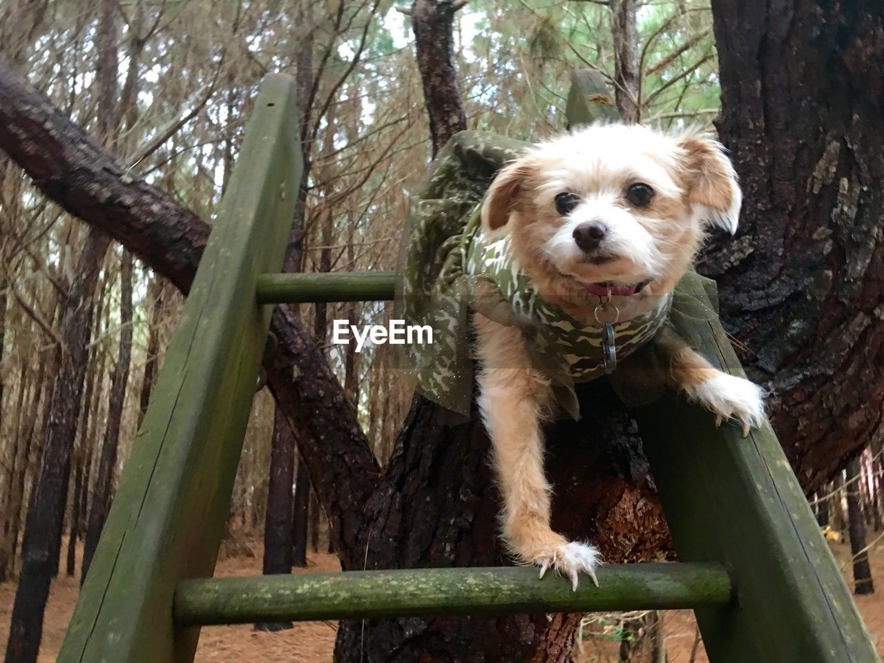 Low angle view of dog on ladder against tree