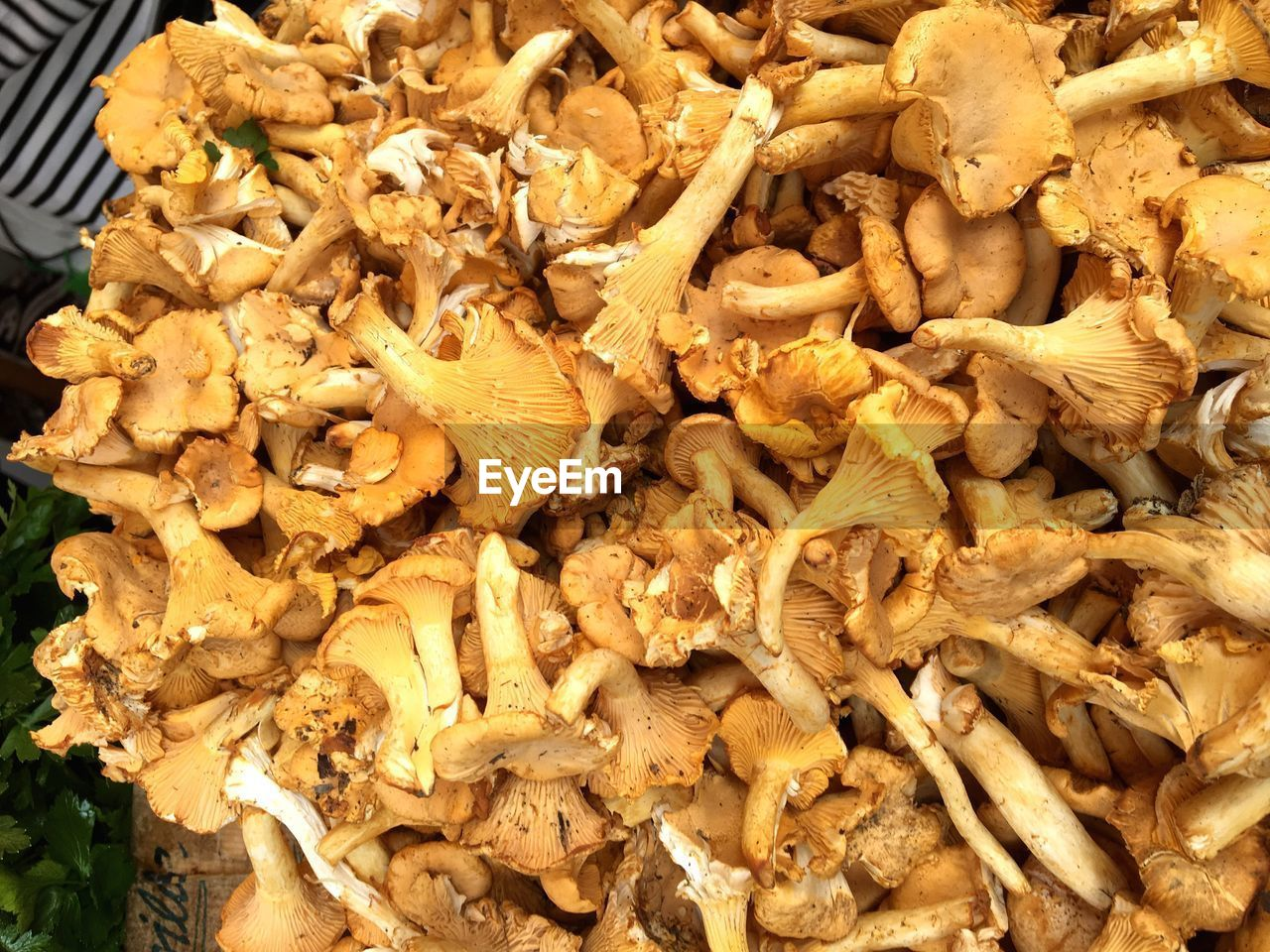 food, food and drink, freshness, still life, vegetable, mushroom, wellbeing, healthy eating, no people, close-up, edible mushroom, large group of objects, high angle view, abundance, fungus, indoors, raw food, snack, retail, market