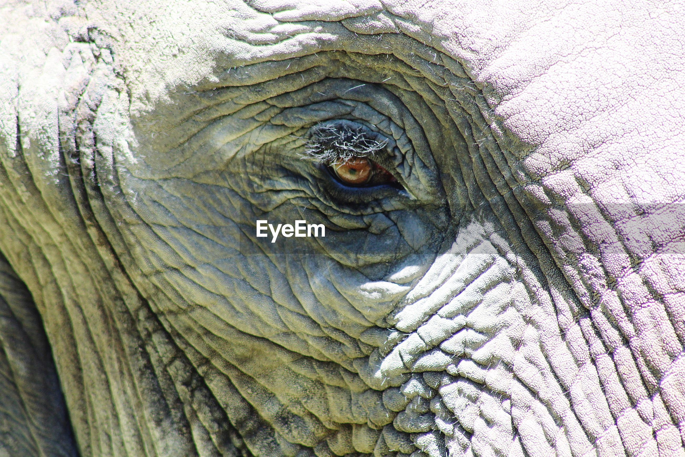 Full frame shot of elephant
