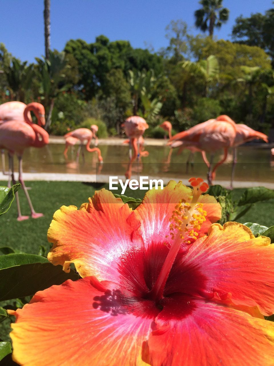 flower, nature, beauty in nature, plant, growth, outdoors, petal, pink color, day, flamingo, animal themes, flower head, fragility, close-up, no people, bird, freshness, blooming, tree