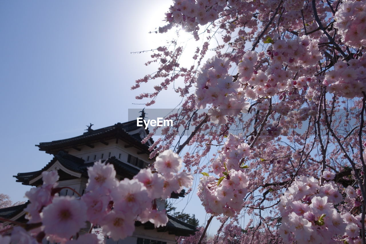 flower, cherry blossom, tree, blossom, springtime, cherry tree, fragility, branch, low angle view, pink color, growth, beauty in nature, freshness, apple blossom, plum blossom, nature, no people, apple tree, magnolia, botany, orchard, day, petal, clear sky, outdoors, blooming, built structure, architecture, building exterior, sky, flower head, close-up