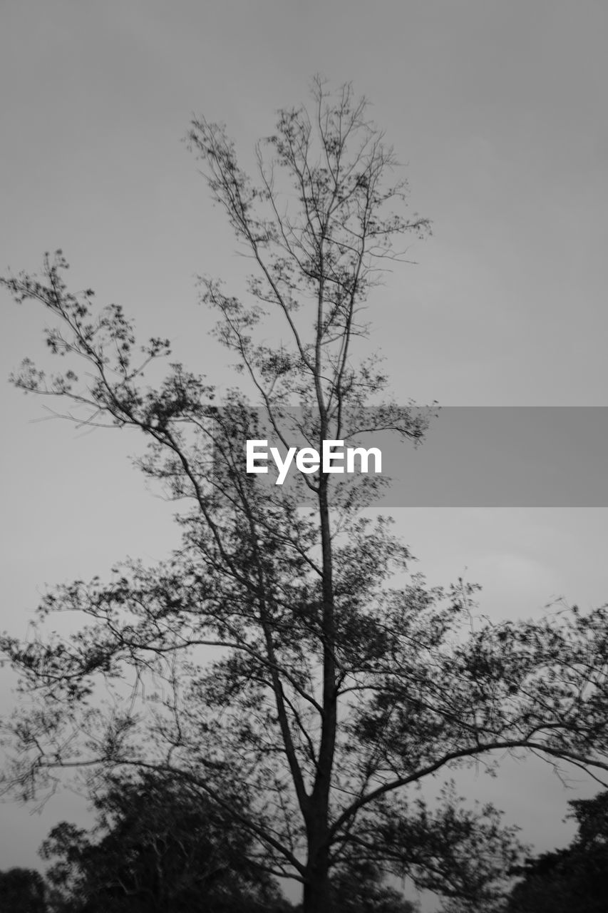 tree, low angle view, nature, branch, outdoors, beauty in nature, tranquility, no people, sky, clear sky, day, growth, scenics