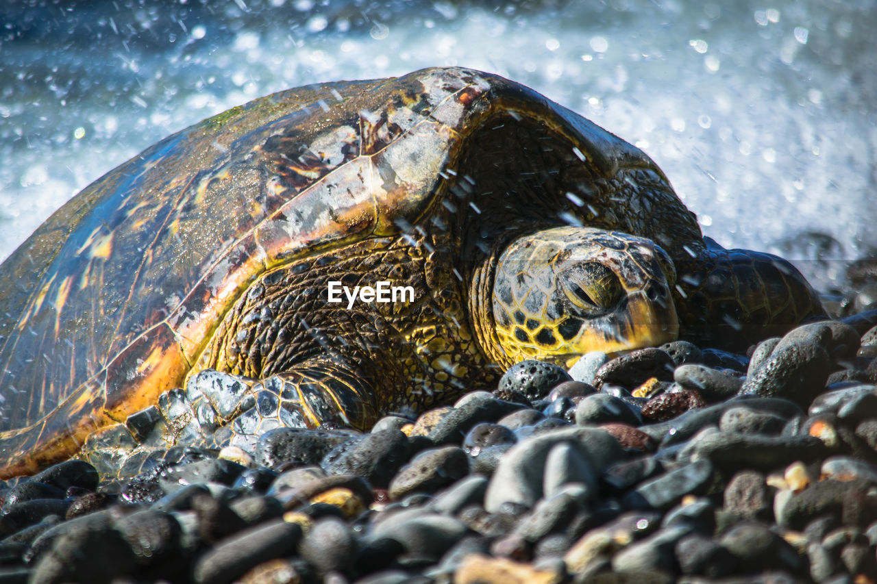 Close-up of turtle on rock at beach
