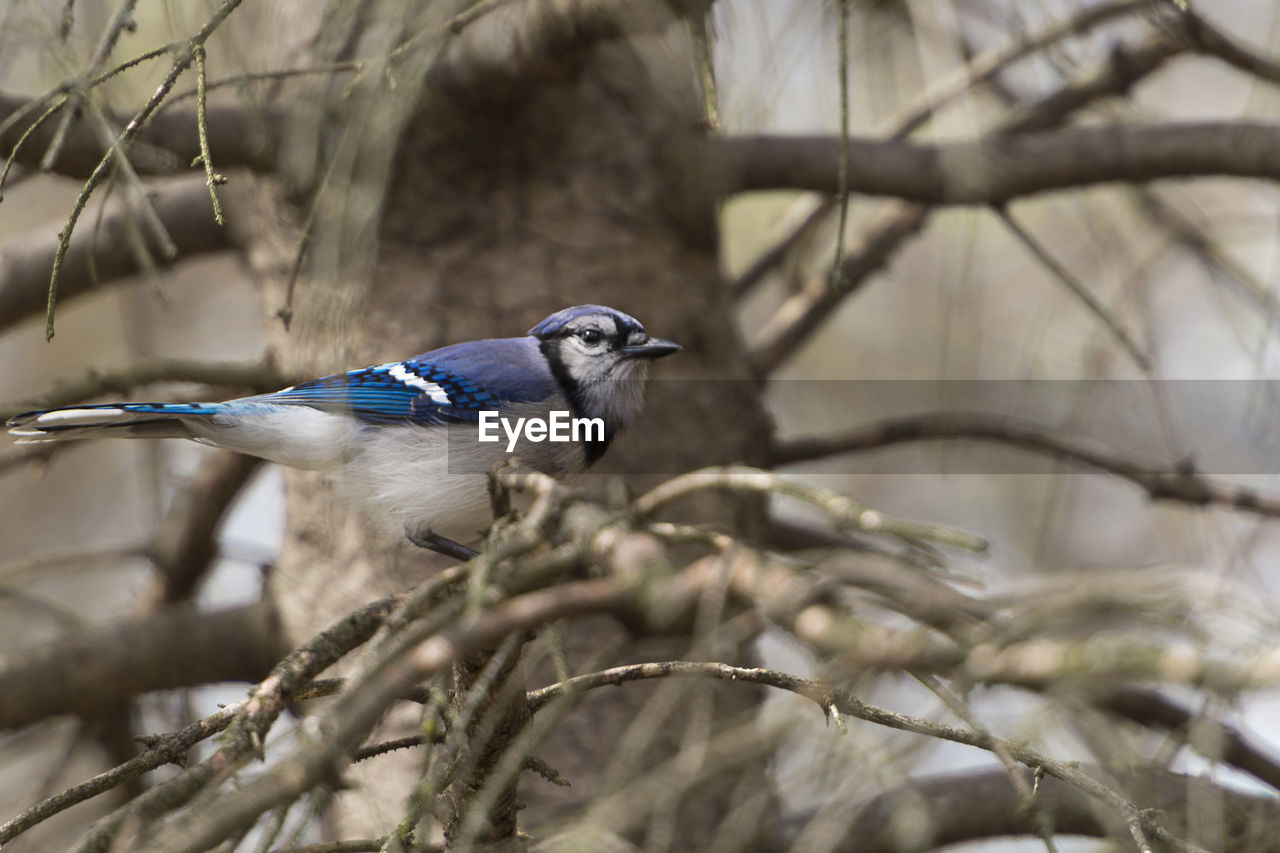 bird, vertebrate, animal themes, one animal, animal, animal wildlife, animals in the wild, perching, tree, plant, branch, no people, day, focus on foreground, selective focus, nature, outdoors, bare tree, low angle view, close-up