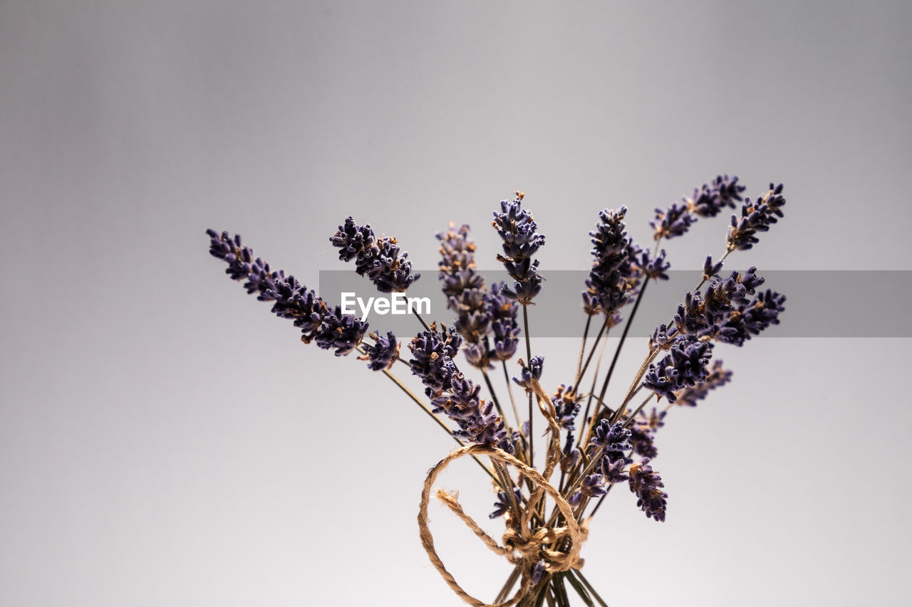 plant, flower, flowering plant, close-up, no people, beauty in nature, indoors, nature, vulnerability, freshness, fragility, growth, studio shot, copy space, white background, flower head, plant stem, still life, day, lavender, purple, flower arrangement, wilted plant