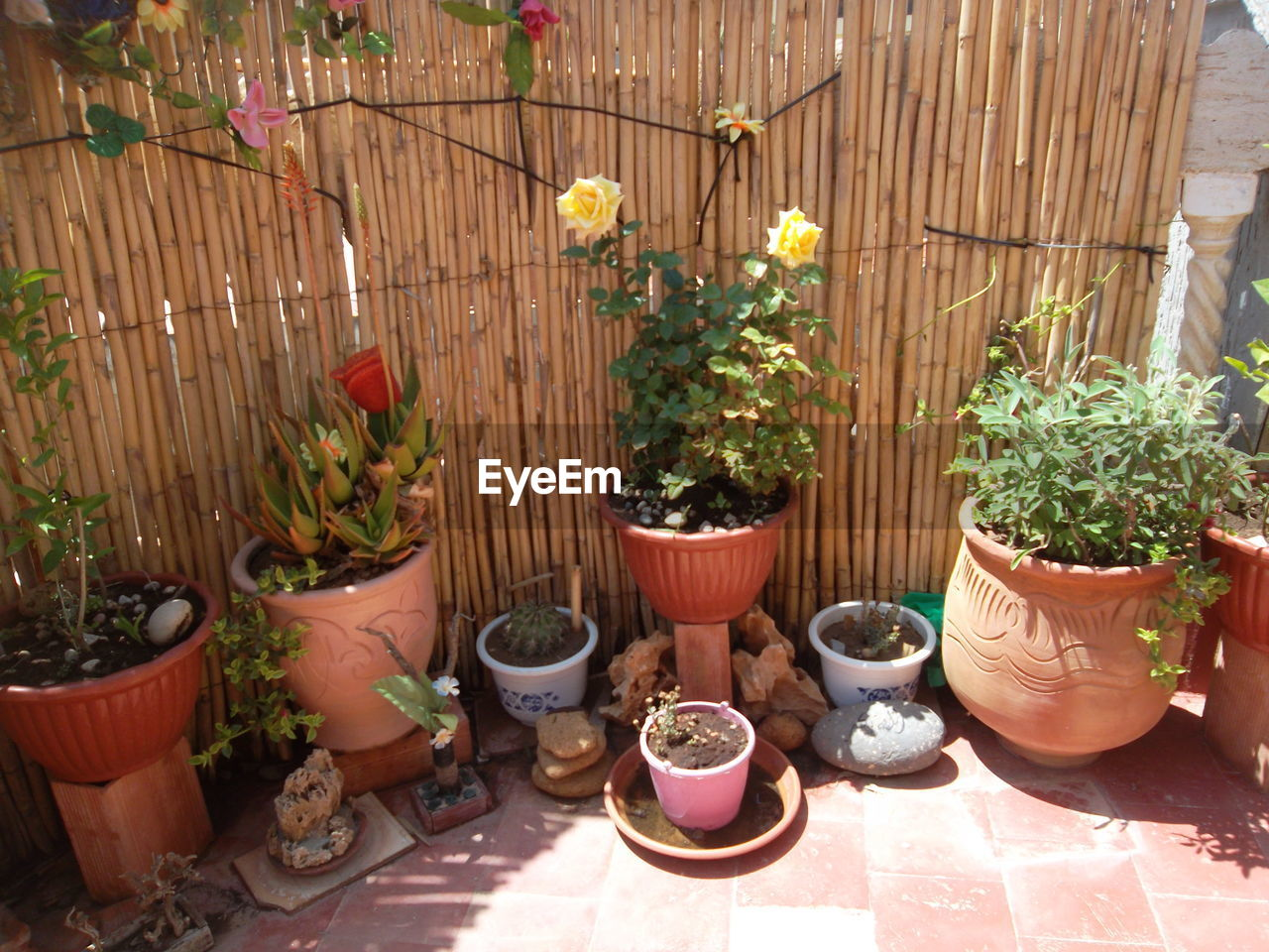 potted plant, plant, growth, no people, flower, day, outdoors, nature, greenhouse