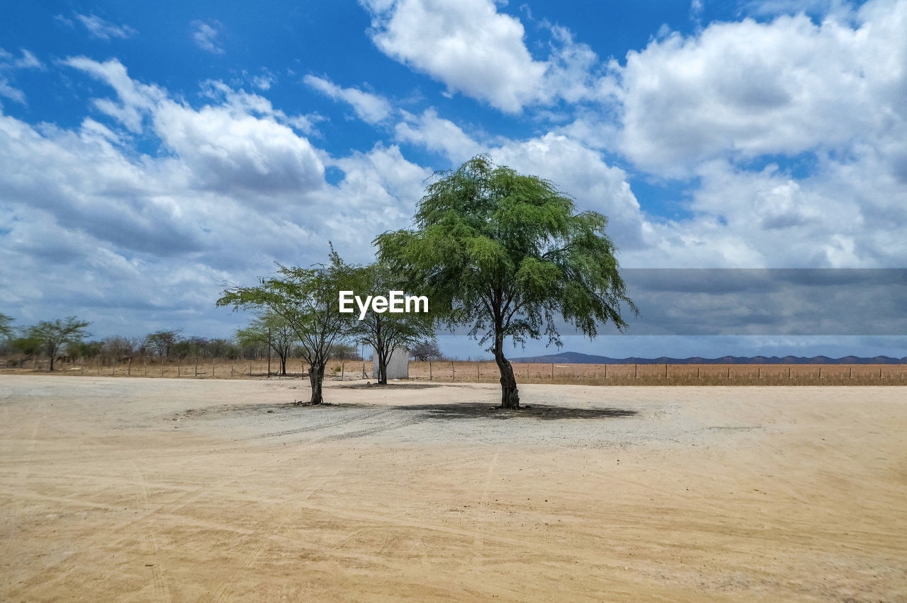 sky, cloud - sky, tree, landscape, plant, land, tranquil scene, scenics - nature, environment, beauty in nature, tranquility, nature, day, no people, field, non-urban scene, growth, outdoors, sand, idyllic, arid climate
