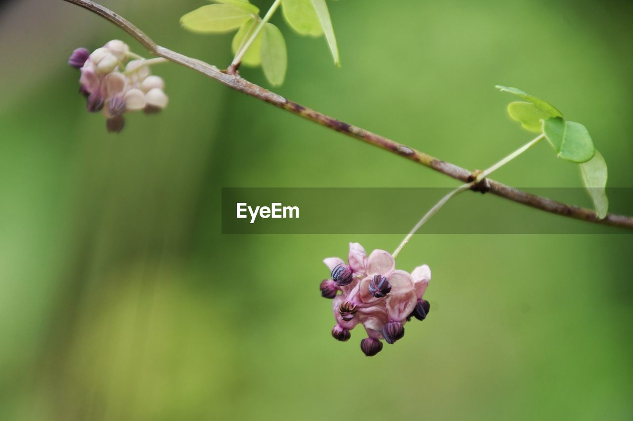 plant, growth, flower, focus on foreground, flowering plant, beauty in nature, close-up, nature, vulnerability, plant part, fragility, leaf, green color, animal themes, one animal, day, no people, freshness, animals in the wild, animal, flower head, outdoors, purple, pollination