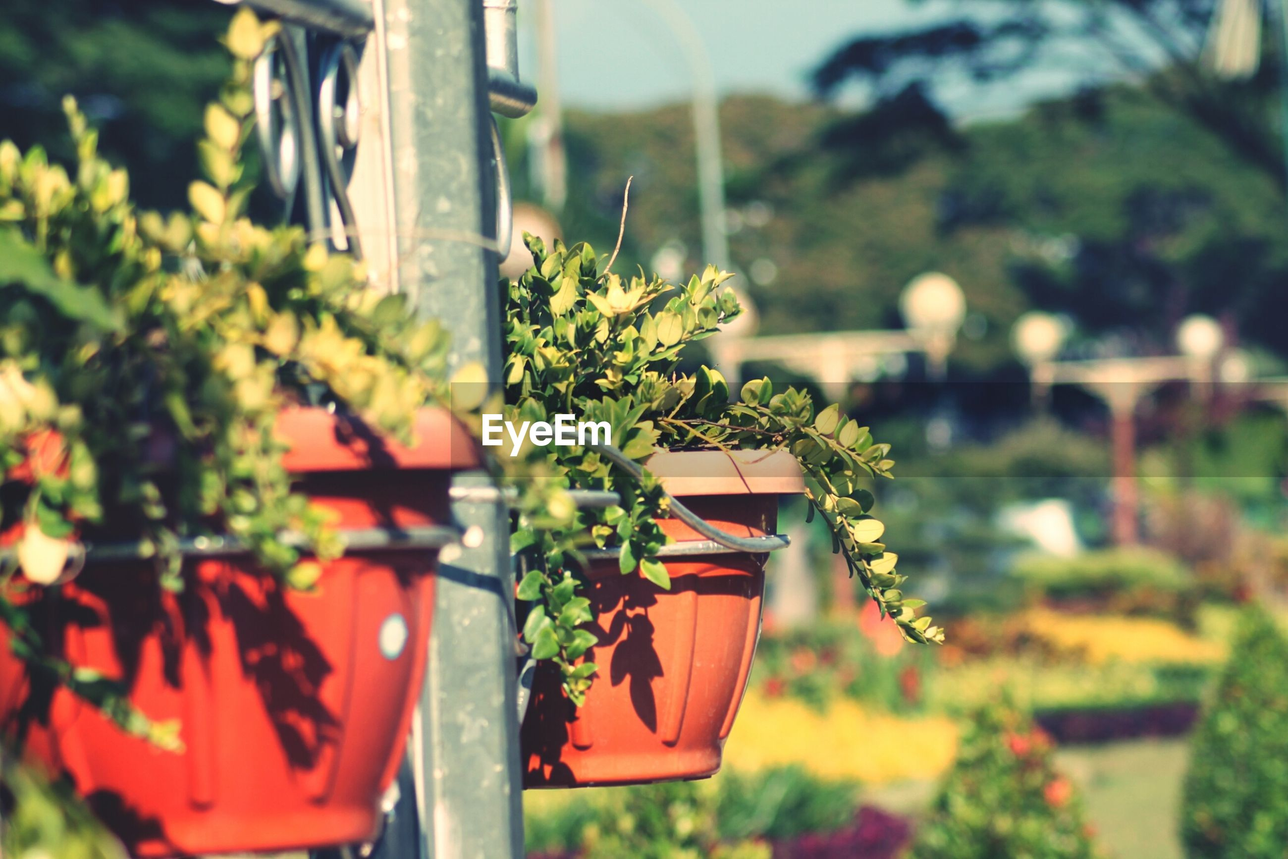 focus on foreground, plant, growth, flower, potted plant, close-up, freshness, selective focus, red, green color, nature, front or back yard, day, leaf, fragility, flower pot, beauty in nature, outdoors, tree, house
