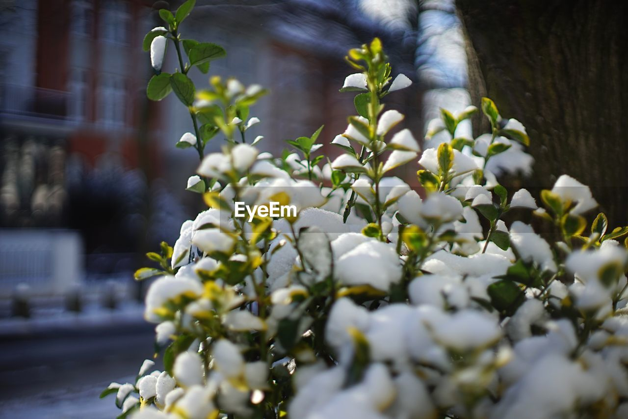 growth, flower, nature, outdoors, day, freshness, plant, beauty in nature, no people, fragility, tree, close-up