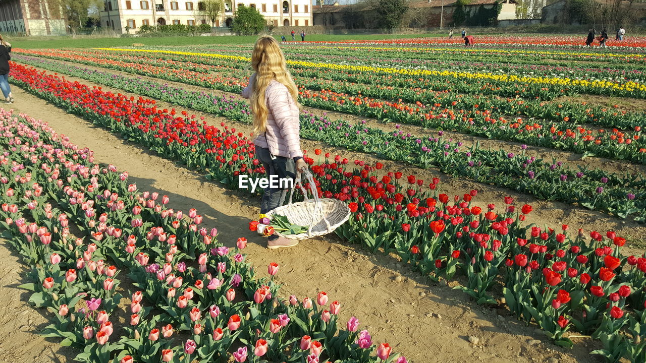 flower, flowering plant, plant, one person, growth, beauty in nature, nature, freshness, women, adult, full length, real people, day, abundance, agriculture, tulip, lifestyles, field, vulnerability, outdoors, flowerbed, springtime, flower head