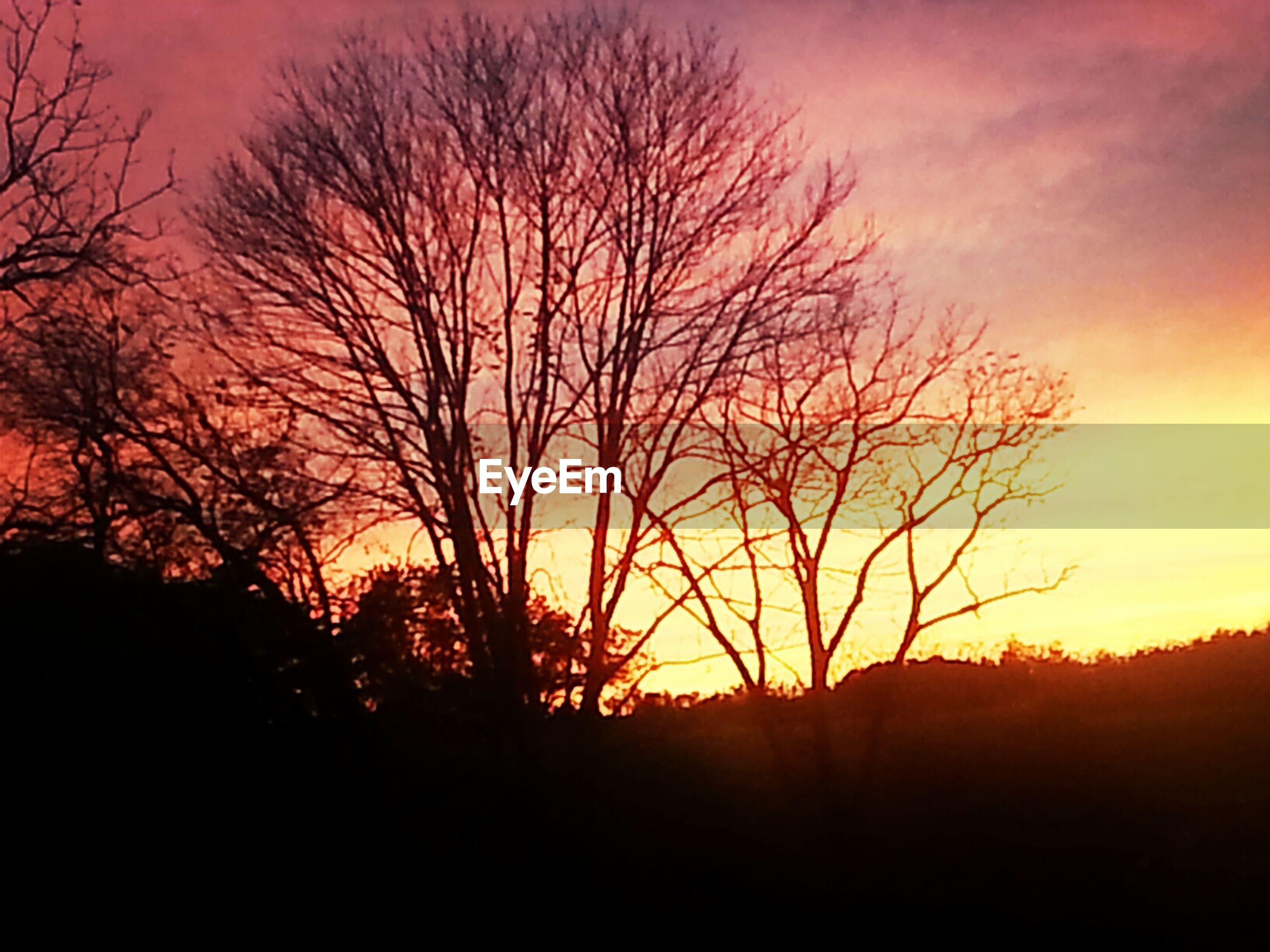 Bare trees on field during sunset