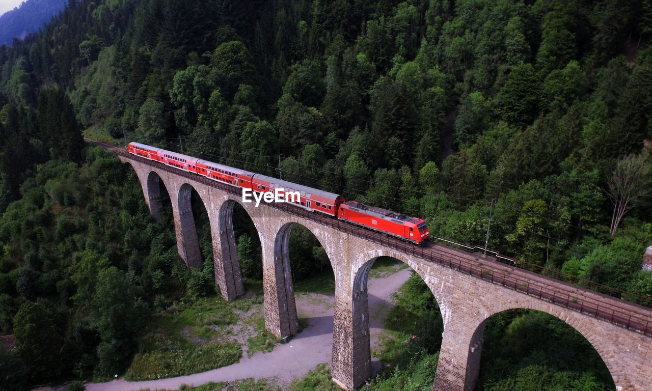 RED TRAIN AMIDST TREES IN FOREST