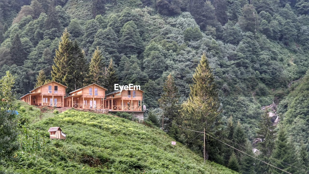 house, architecture, tree, built structure, building exterior, day, grass, outdoors, agriculture, scenics, no people, nature