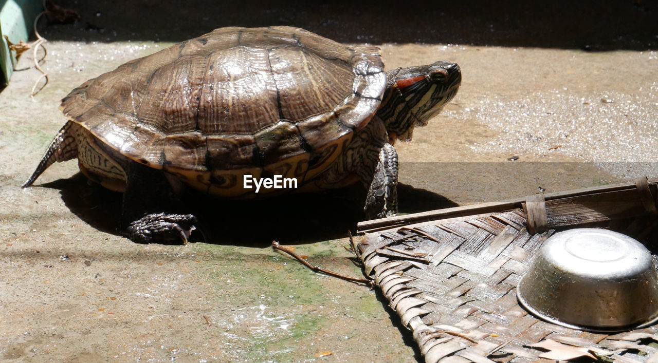 animal, turtle, animal themes, animal wildlife, reptile, vertebrate, shell, animals in the wild, one animal, animal shell, day, container, high angle view, nature, no people, sunlight, tortoise, close-up, water, tortoise shell, marine