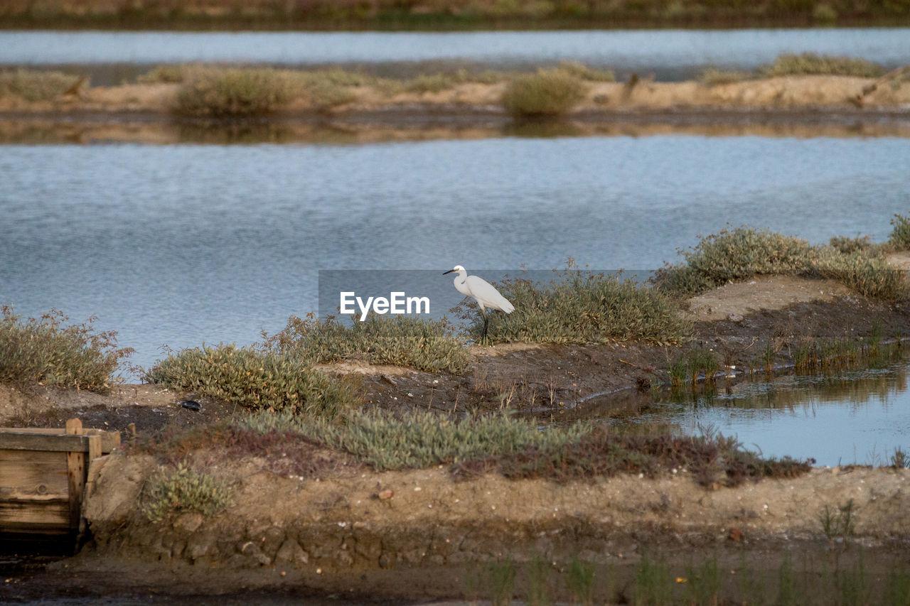Bird On Lakeshore