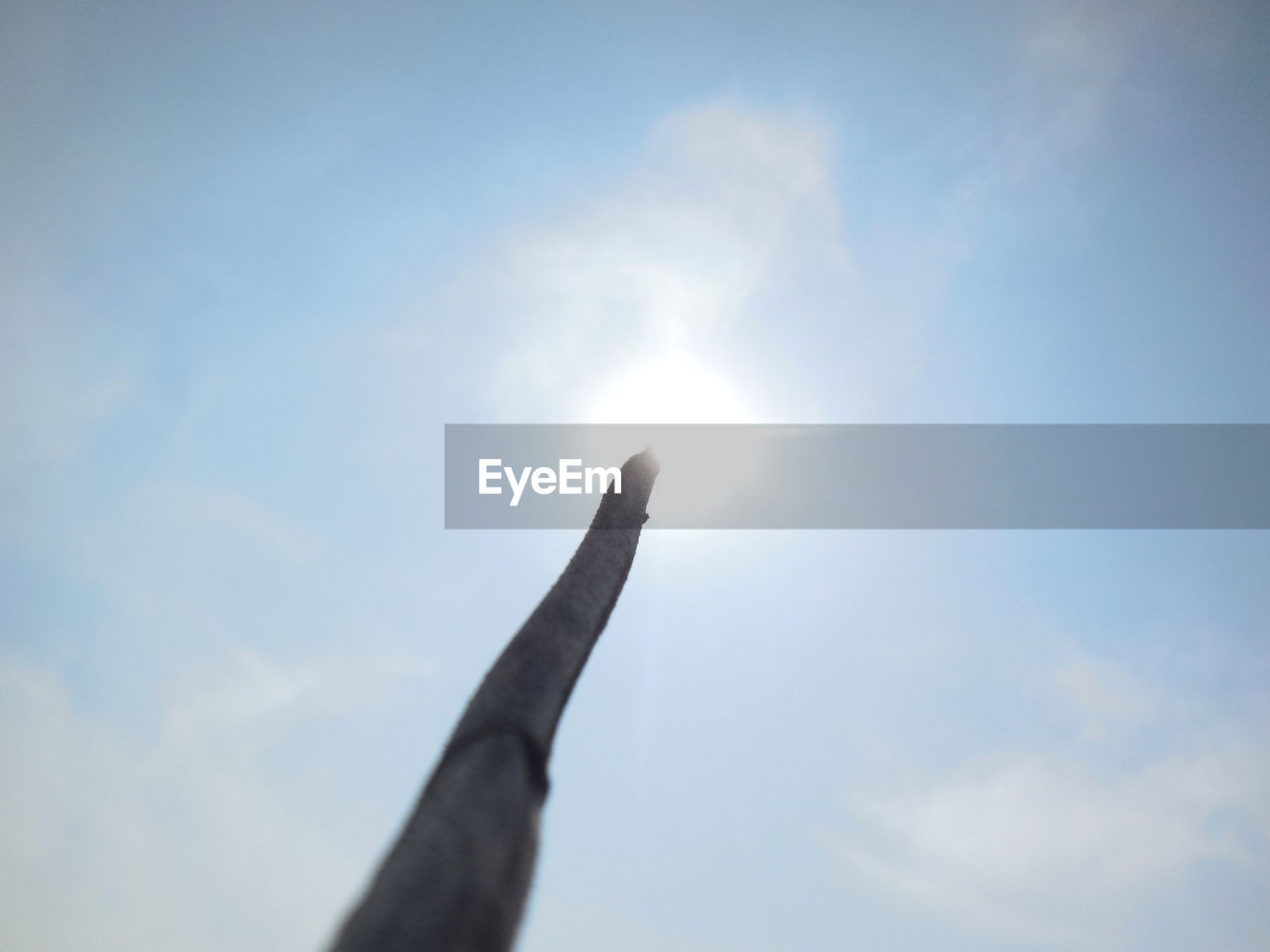 sun, sky, low angle view, sunlight, outdoors, cloud - sky, day, nature, no people, beauty in nature, close-up