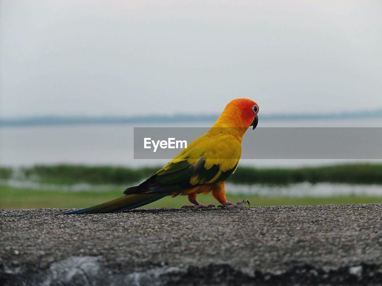 vertebrate, bird, animal, animal themes, one animal, animal wildlife, animals in the wild, sky, day, selective focus, no people, nature, perching, parrot, outdoors, full length, transportation, beauty in nature, yellow, close-up
