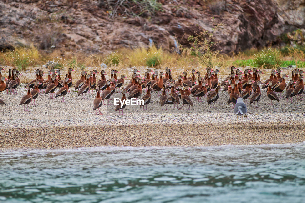 animals in the wild, animal themes, large group of animals, animal wildlife, animal, bird, group of animals, vertebrate, water, nature, no people, flock of birds, lake, day, land, flamingo, beauty in nature, outdoors, colony