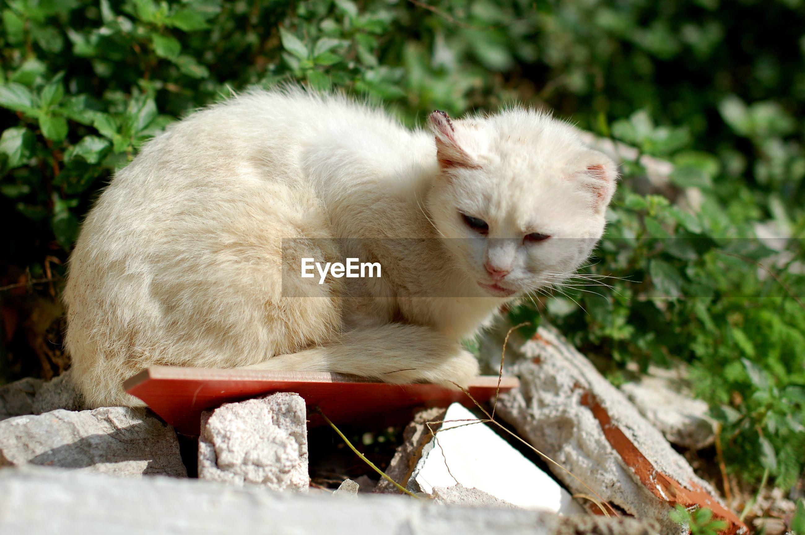 Cat relaxing on rocks