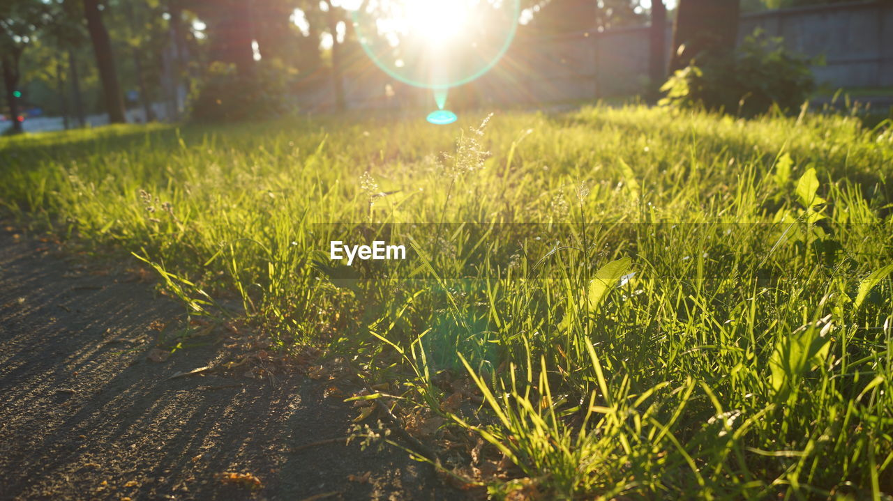grass, nature, growth, field, no people, tranquility, outdoors, beauty in nature, sunlight, day, close-up