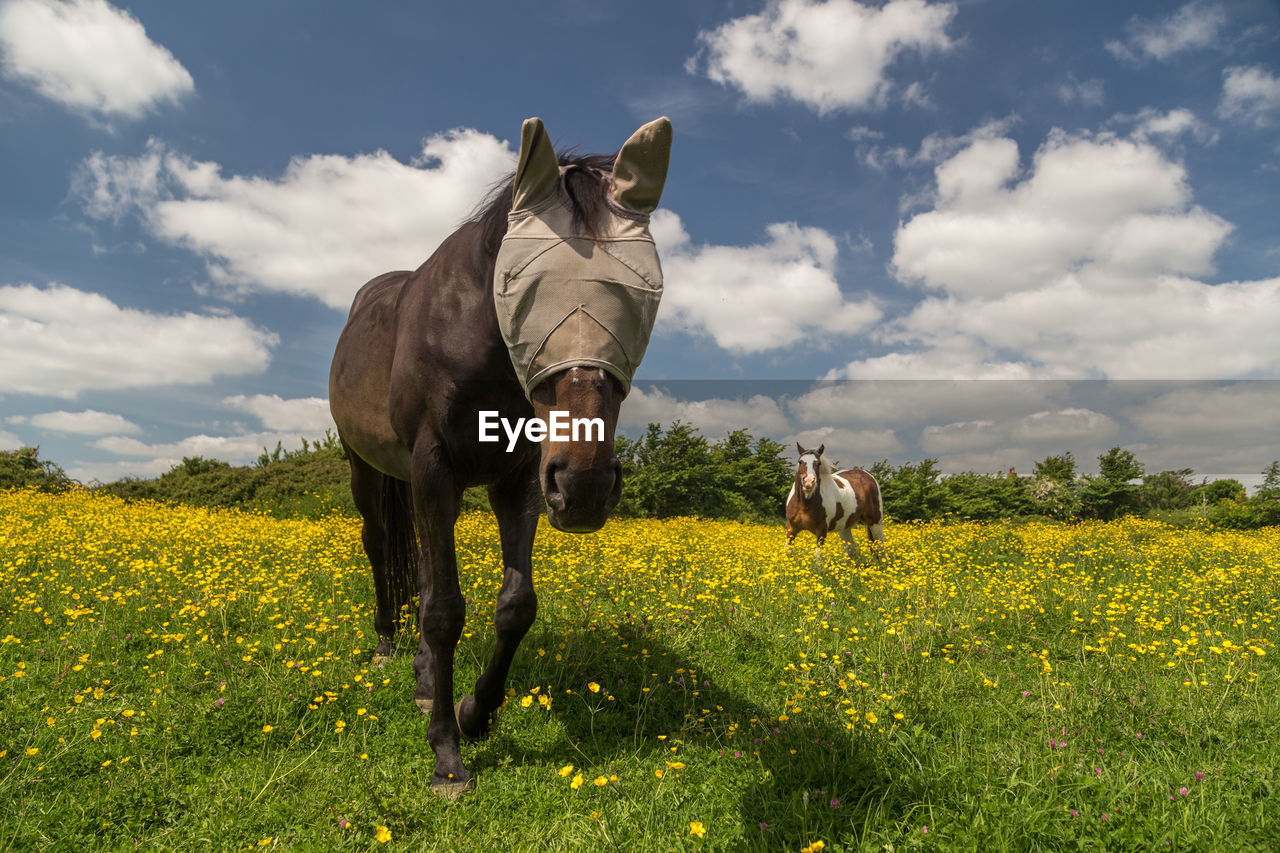 Horse wearing fly mask on grassy field against cloudy sky