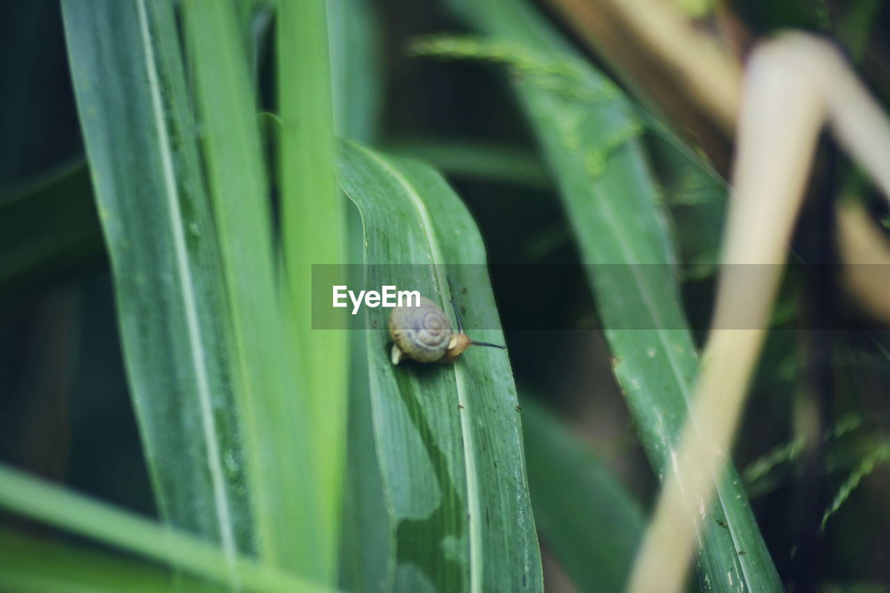 animal, animal themes, animal wildlife, green color, one animal, shell, animals in the wild, mollusk, plant, animal shell, close-up, invertebrate, plant part, gastropod, leaf, no people, snail, growth, selective focus, nature, outdoors, blade of grass