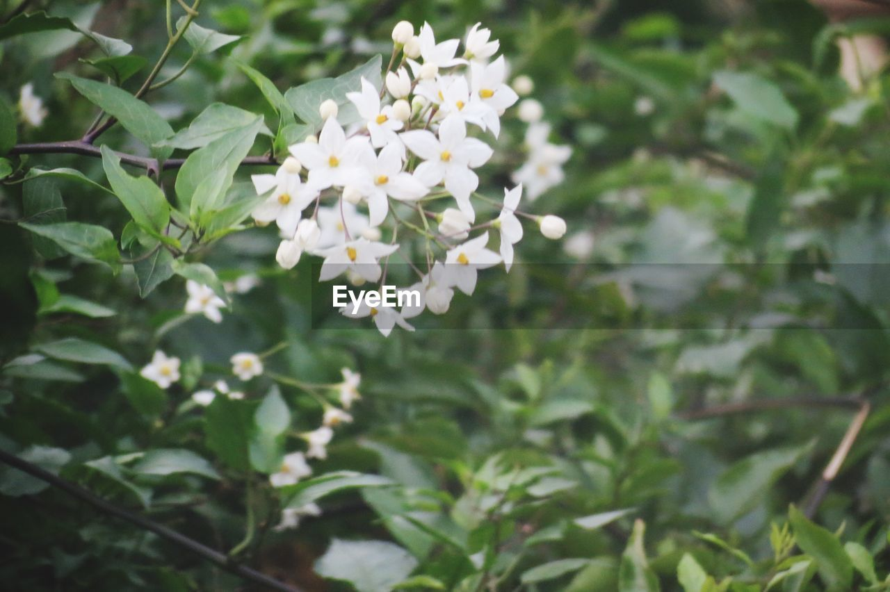 flower, growth, nature, blooming, plant, spring, no people, beauty in nature, outdoors, freshness, fragility, day