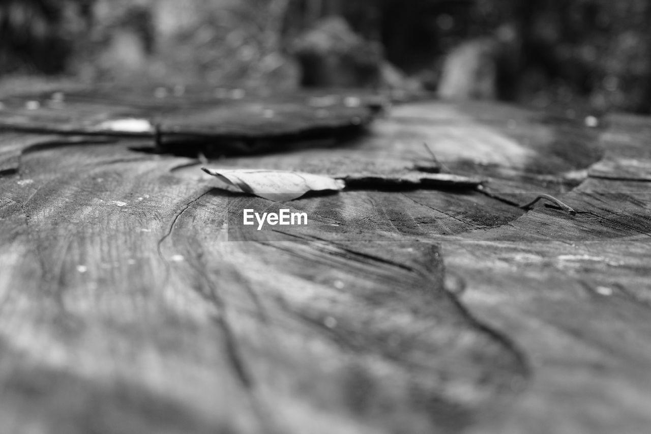 Surface level of wood