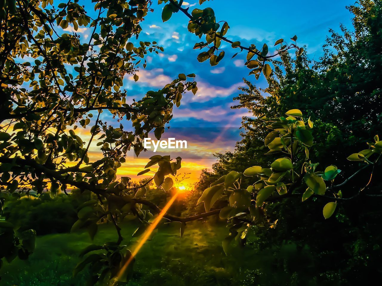plant, sky, growth, tree, nature, beauty in nature, cloud - sky, leaf, plant part, sunlight, no people, sunset, tranquility, flower, freshness, flowering plant, agriculture, day, green color, outdoors