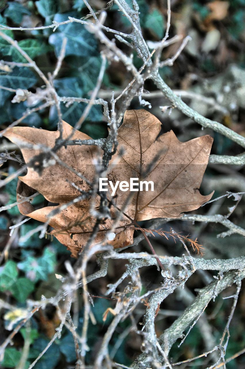 leaf, autumn, dry, change, nature, day, close-up, outdoors, fragility, no people, beauty in nature
