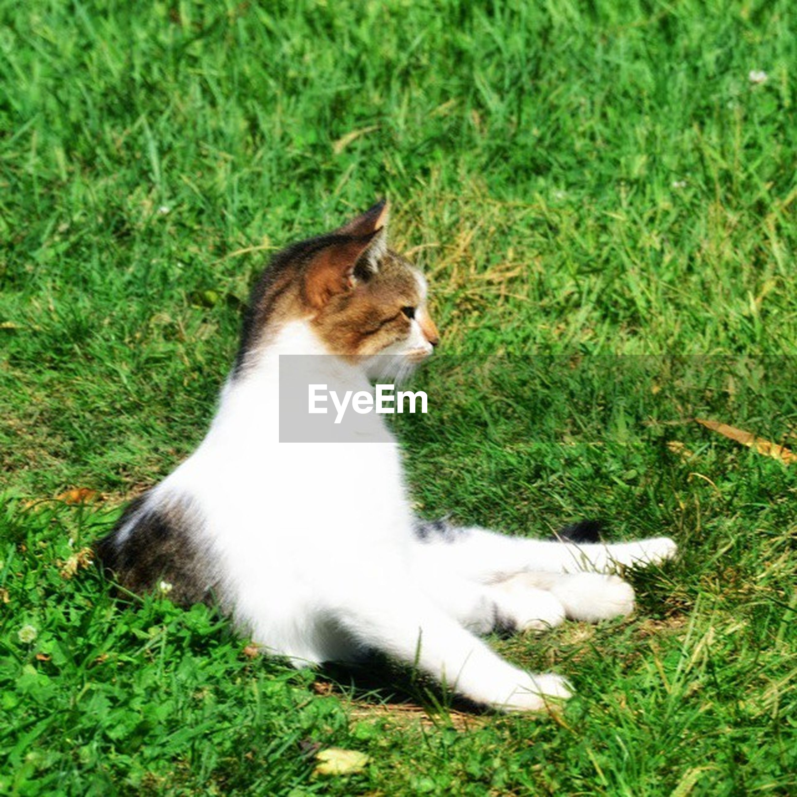 pets, domestic animals, animal themes, one animal, domestic cat, mammal, cat, feline, grass, sitting, relaxation, field, whisker, green color, plant, grassy, alertness, nature, looking away, full length