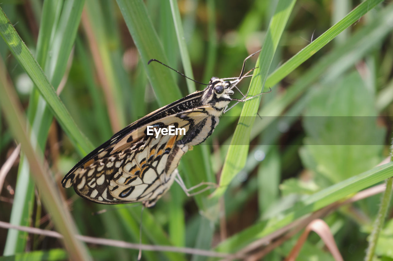 animal wildlife, animals in the wild, animal themes, insect, animal, invertebrate, one animal, plant, butterfly - insect, animal wing, beauty in nature, green color, close-up, nature, focus on foreground, no people, day, growth, plant part, animal markings, butterfly