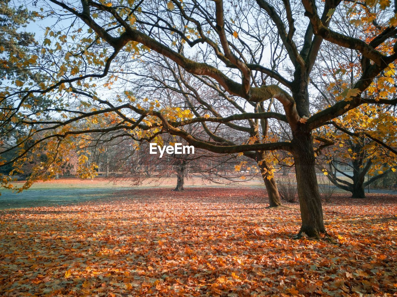 autumn, tree, change, leaf, plant part, plant, nature, land, tranquility, no people, day, scenics - nature, branch, landscape, beauty in nature, tranquil scene, outdoors, orange color, field, forest, autumn collection, fall, leaves