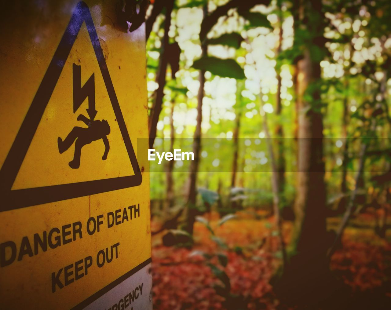 communication, sign, text, focus on foreground, tree, warning sign, human representation, representation, western script, close-up, no people, information, nature, land, forest, plant, outdoors, day, road sign, yellow, guidance