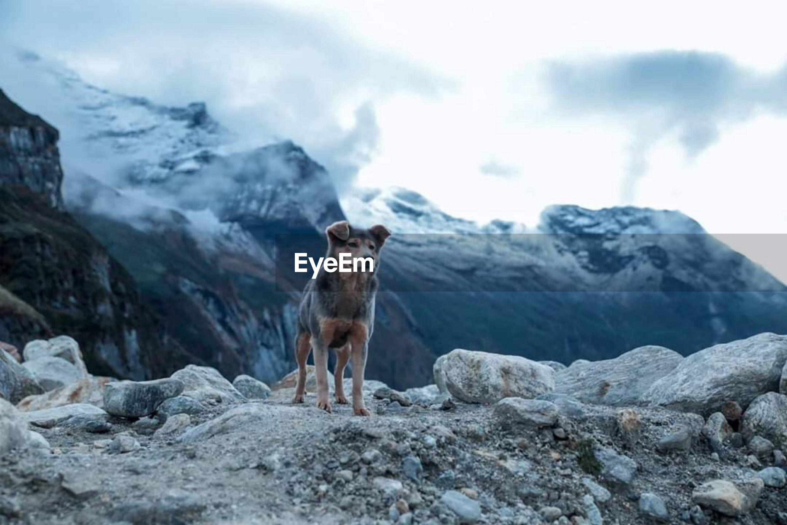 Dog looking away while standing against mountain