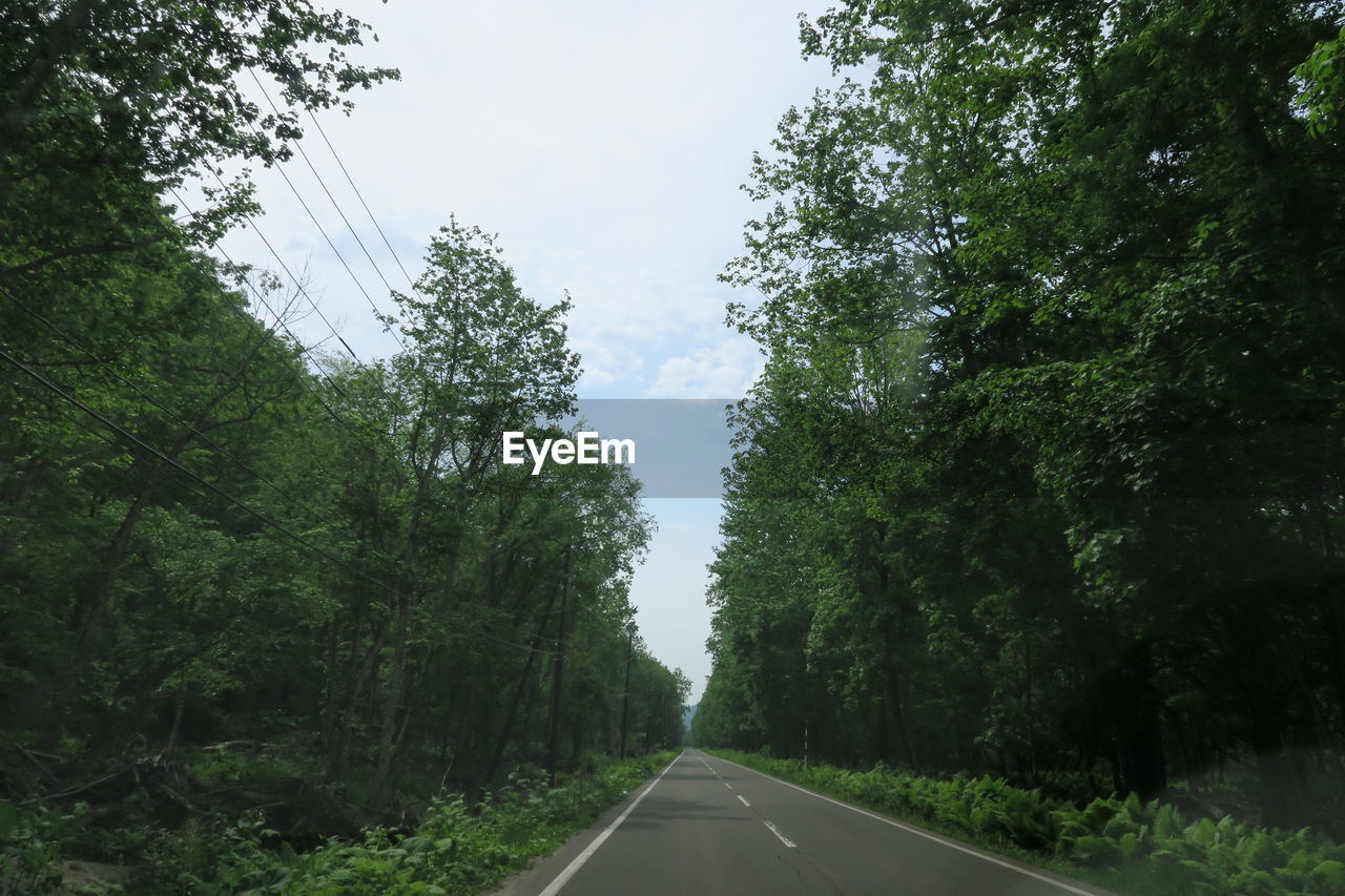 tree, direction, plant, transportation, the way forward, road, sky, growth, diminishing perspective, nature, green color, no people, sign, day, vanishing point, symbol, beauty in nature, non-urban scene, road marking, forest, outdoors, long