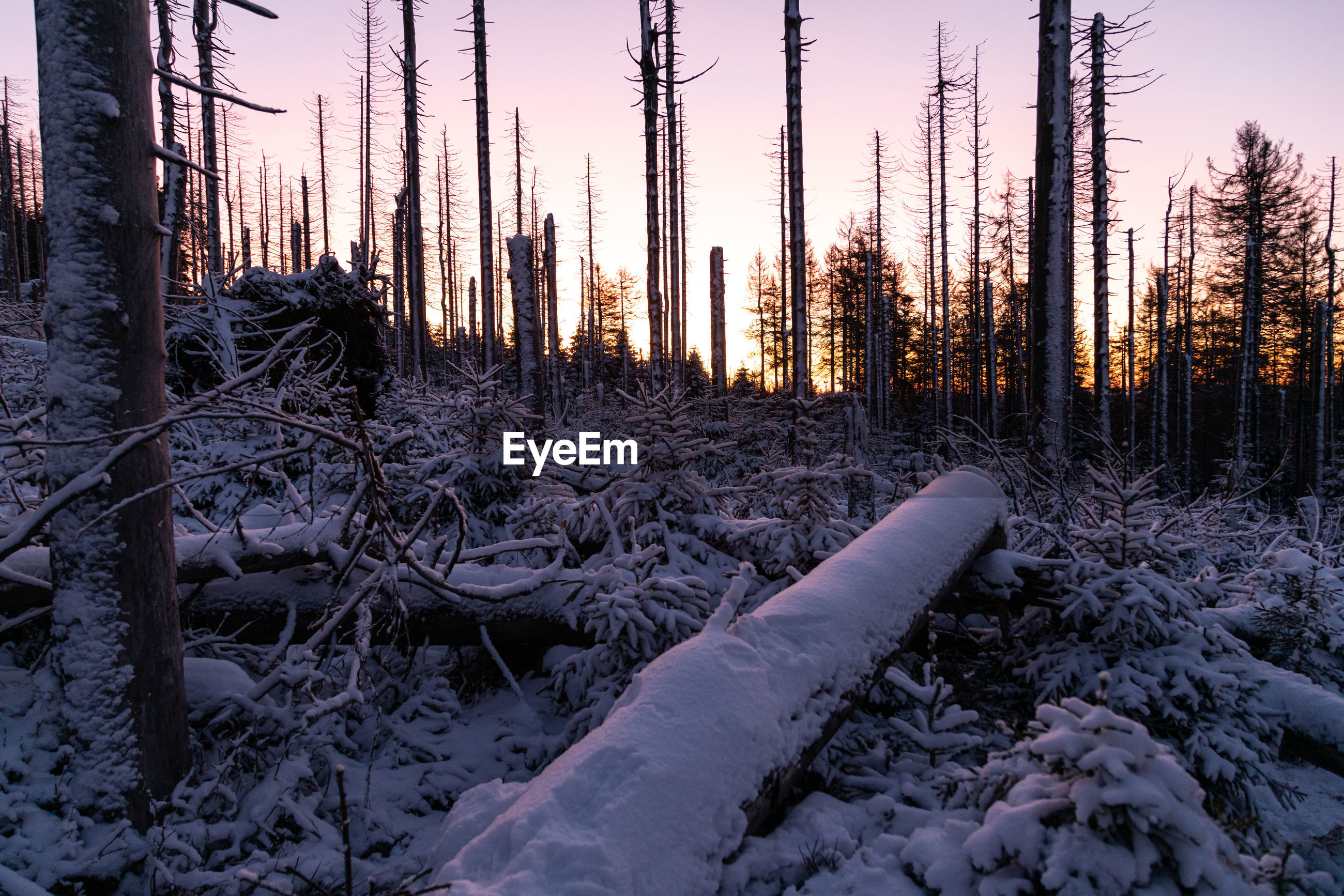 SCENIC VIEW OF FROZEN FOREST AGAINST SKY DURING WINTER
