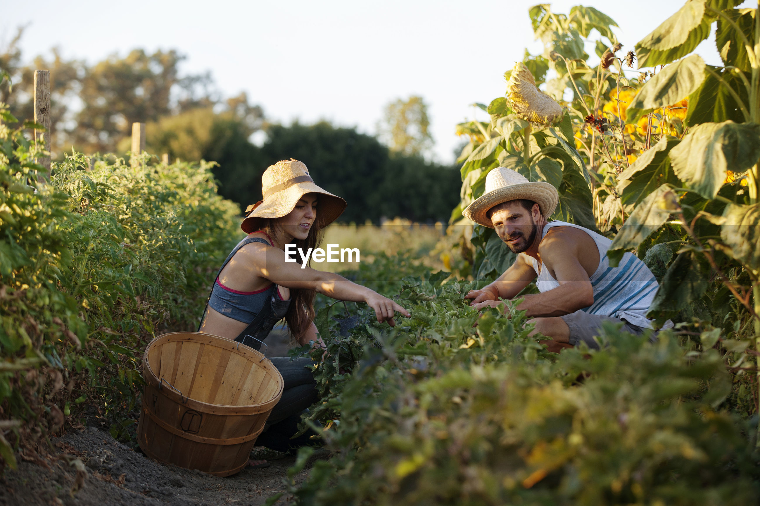 Woman showing plants to man while working in farm