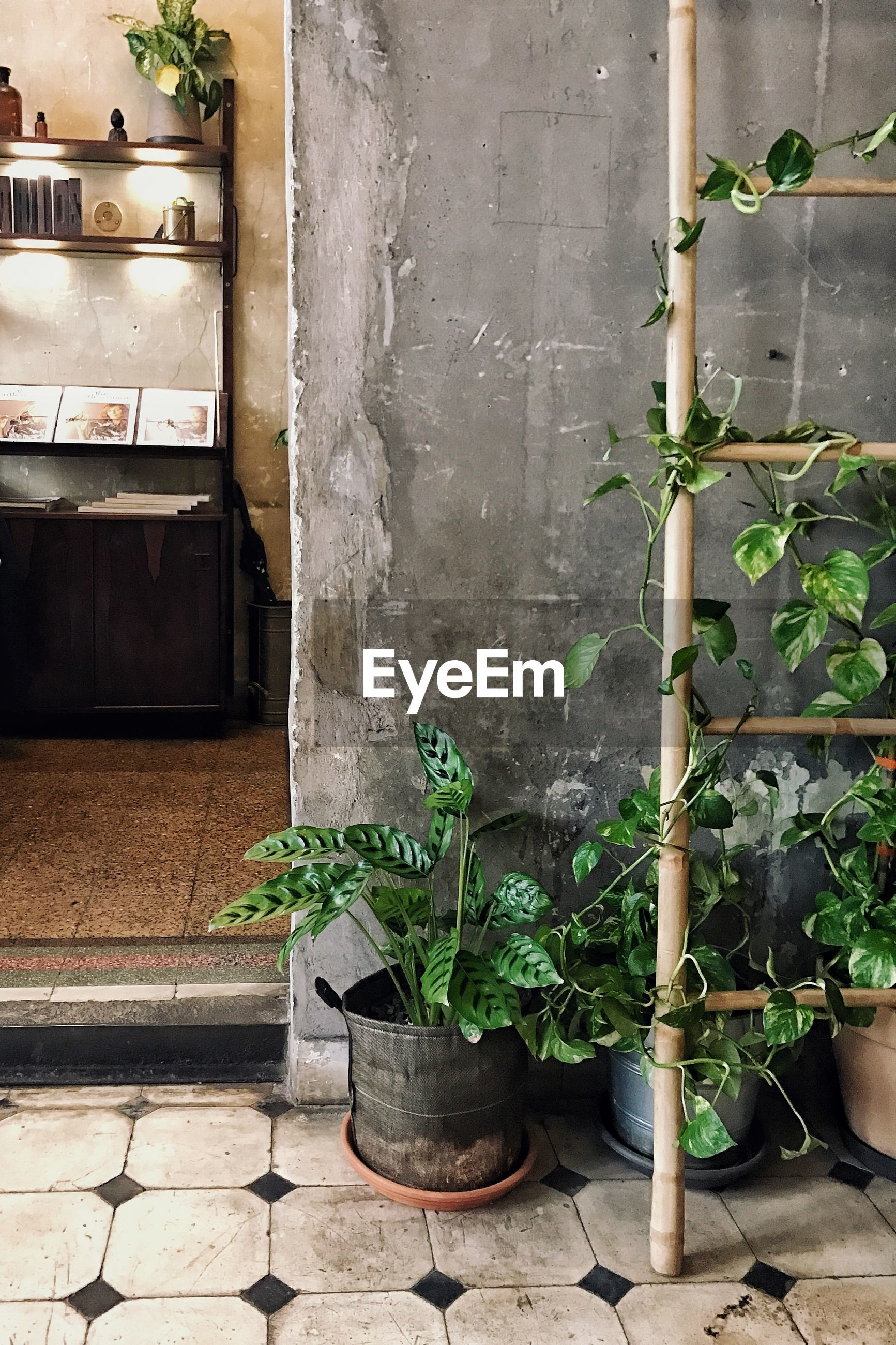 Potted plants and ladder against wall